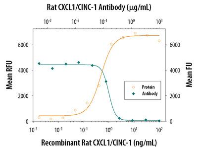 CXCL1 / GRO alpha / KC / CINC-1 Antibody