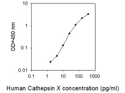 Human Cathepsin X (Cathepsin P ELISA