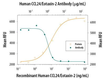 CCL24 / Eotaxin-2 / MPIF-2 Antibody