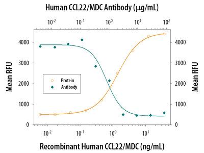 CCL22 /MDC Antibody