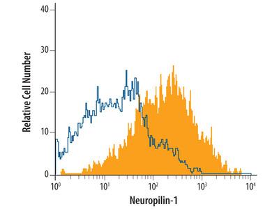 Mouse / Rat Neuropilin-1 Antibody