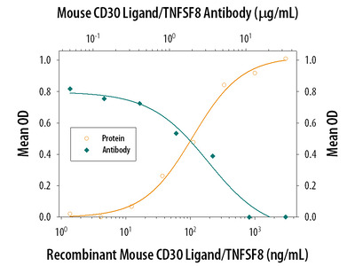 CD30 Ligand / TNFSF8 Antibody