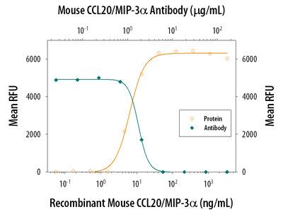 CCL20 /MIP-3 alpha Antibody