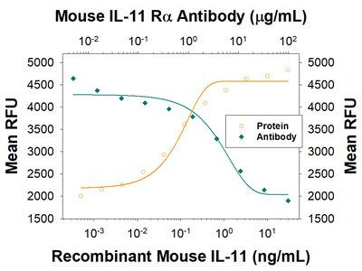 Mouse IL-11 R alpha Antibody