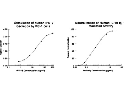 Human IL-18 R beta / IL-1 R7 Antibody