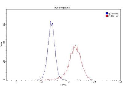 C5aR antibody