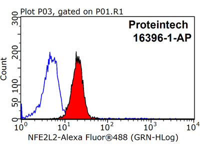 NRF2, NFE2L2 antibody