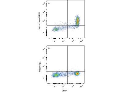 Leukotriene B4R1 / BLT1 Fluorescein-conjugated Antibody