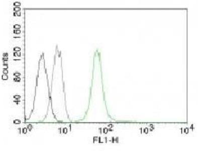 Anti-Vimentin antibody [VM452]