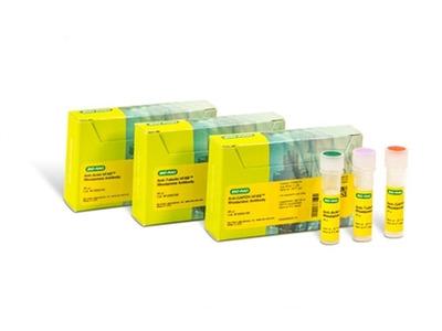 ANTI-TUBULIN hFAB™ RHODAMINE ANTIBODY