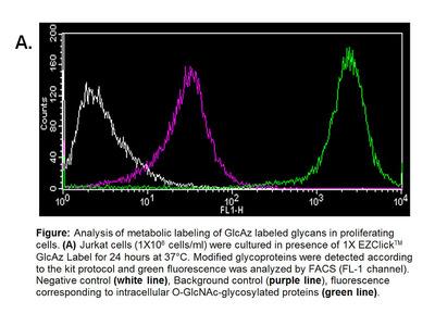 EZClick™ O-GlcNAc Modified Glycoprotein Assay Kit (FACS/Microscopy, Green Fluorescence)