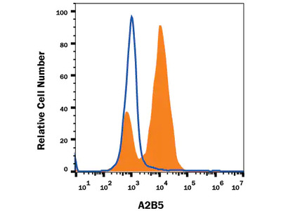 A2B5 Antibody