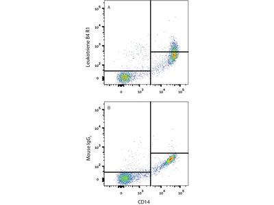 Leukotriene B4R1 / BLT1 Antibody