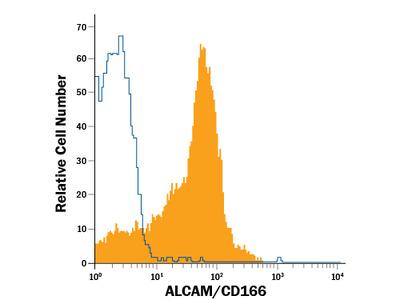 ALCAM /CD166 PE-conjugated Antibody