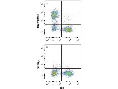 B220 / CD45R Fluorescein-conjugated Antibody