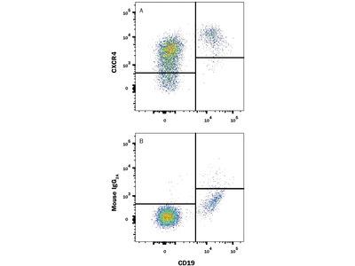 Western blotting: human CXCR4 (Fusin) MAb (Clone 12G5)