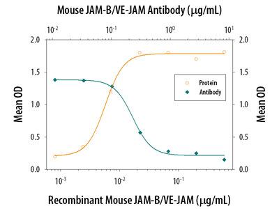 JAM-B/VE-JAM Antibody