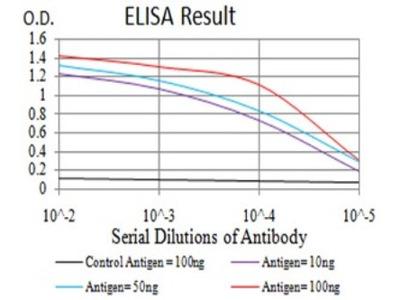RBFOX3 / NeuN Antibody (5A4B9)
