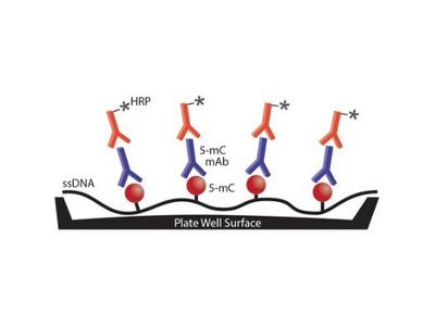 5-MethylCytosine ELISA Kit