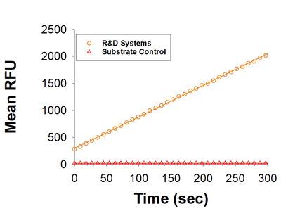 Matriptase / ST14 Catalytic Domain Protein