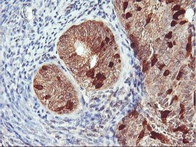 RABL2A Monoclonal Antibody (OTI5A10)