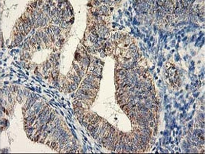 DAND5 Monoclonal Antibody (OTI2H3)