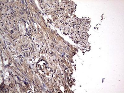 NRBF2 Monoclonal Antibody (OTI1B2)