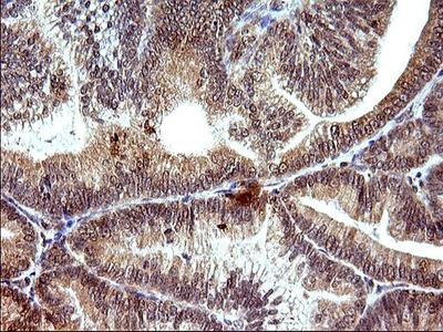 COX4NB Monoclonal Antibody (OTI2A4)
