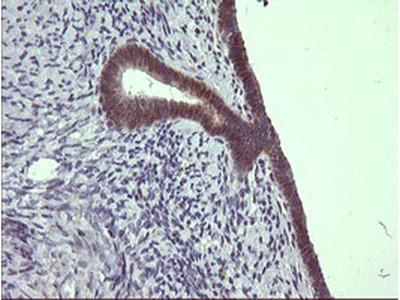 C4orf22 Monoclonal Antibody (OTI1A6)
