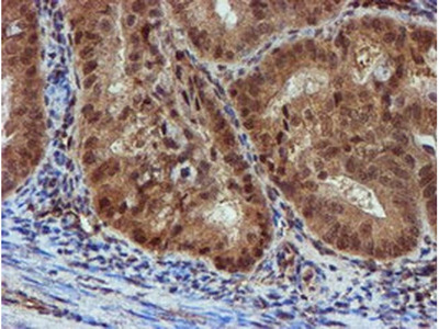 NQO2 Monoclonal Antibody (OTI3G4)