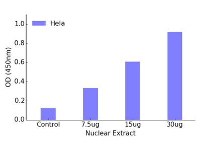 FOXH1 TFact DNA-Binding ELISA Kit