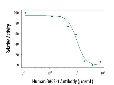 Human / Mouse BACE-1 Ectodomain Antibody
