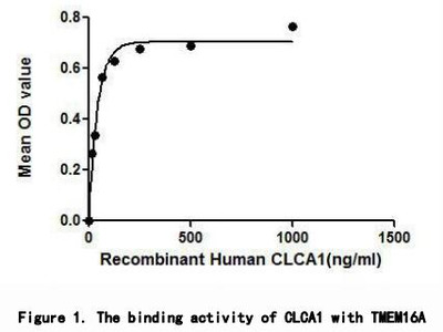 Active Chloride Channel Accessory 1 (CLCA1)