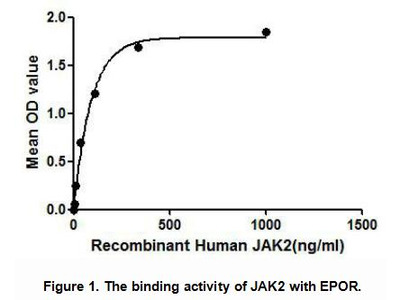 Active Janus Kinase 2 (JAK2)