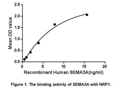 Active Semaphorin 3A (SEMA3A)
