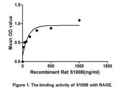 Active S100 Calcium Binding Protein B (S100B)