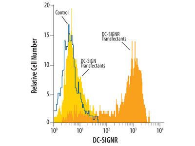 DC-SIGNR /CD299 Antibody
