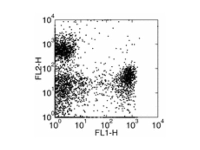 Rat monoclonal Ly6G antibody
