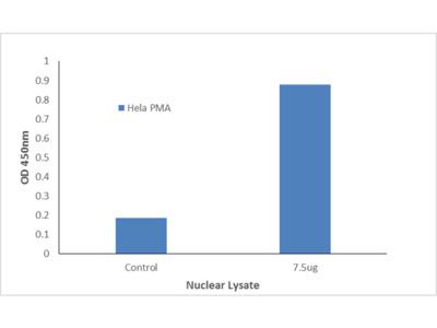 ETV4 TFact DNA-Binding ELISA Kit