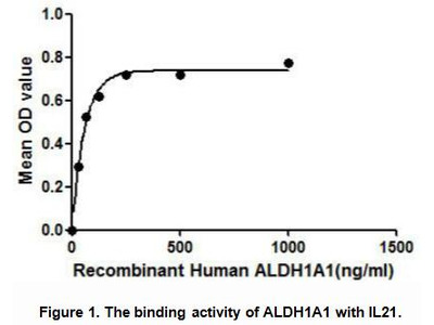 Active Aldehyde Dehydrogenase 1 Family, Member A1 (ALDH1A1)