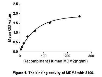 Active Mdm2 p53 Binding Protein Homolog (MDM2)