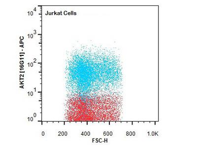 Anti-AKT2 FITC Monoclonal Antibody