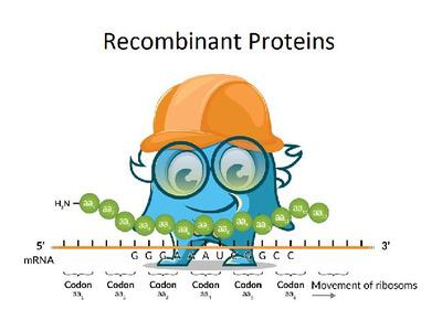 Recombinant Human LD78 Beta (CCL3L1) Protein