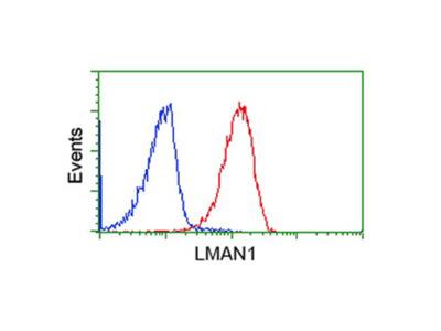 Anti-ERGIC-53 Monoclonal Antibody (OTI1A8)