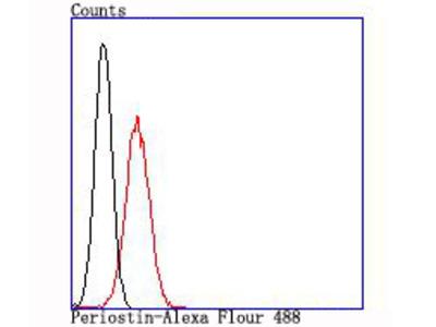 Anti-Periostin POSTN Antibody