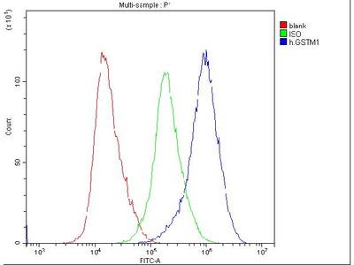 Anti-GSTM1 Picoband Antibody (monoclonal, 11F2)
