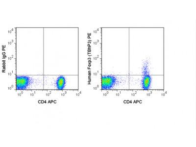 PE Anti-Human FoxP3 Transcription Factor Staining Kit