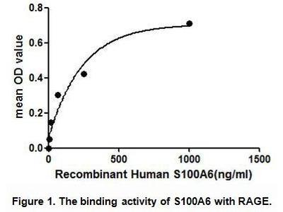 Active S100 Calcium Binding Protein A6 (S100A6)