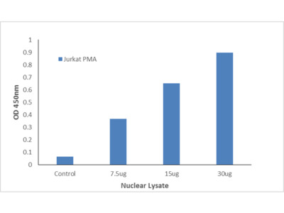 ETS1 (Phospho-Thr38) TFact DNA-Binding ELISA Kit