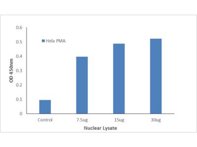 ELF5 TFact DNA-Binding ELISA Kit